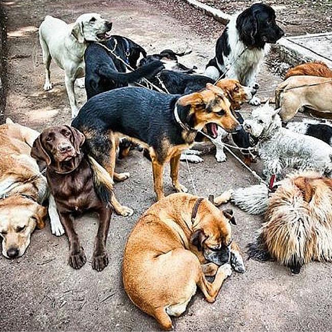 parque mexico dogs