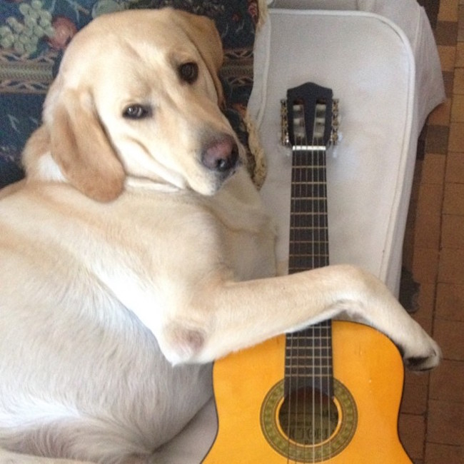 50 Amazing Songs About Dogs That Ll Instantly Brighten Your Day