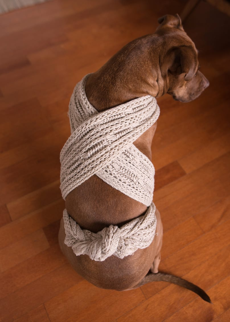 dog using a scarf as an anxiety wrap
