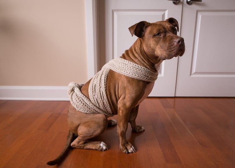 dog scarf anxiety wrap