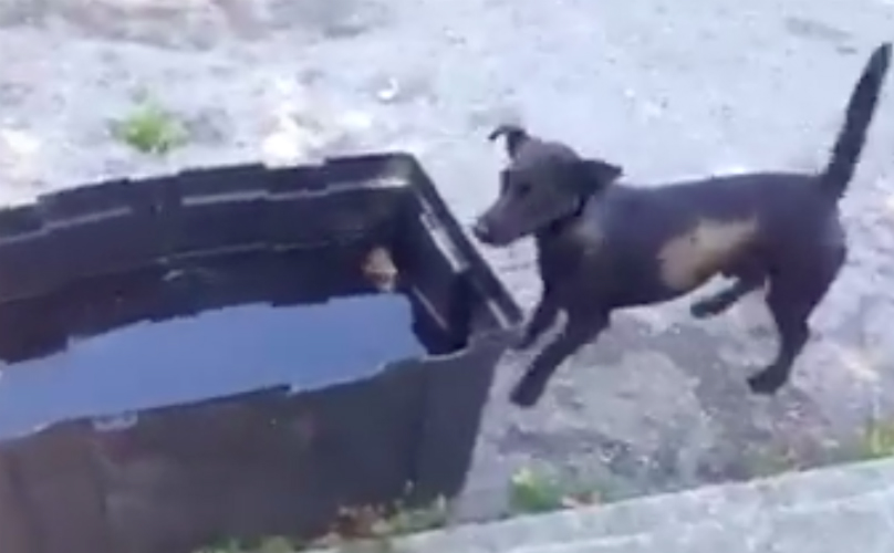 Adorable Dog Swims For Olympic Gold…Inside Of A Plastic Tub