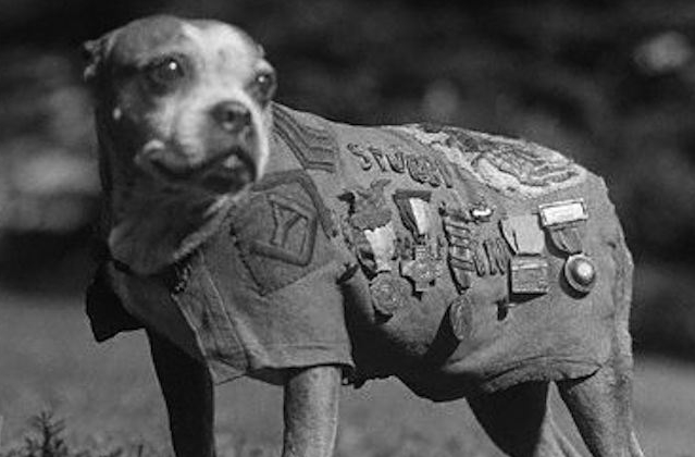 Here S Why Military Working Dogs Outrank Their Human