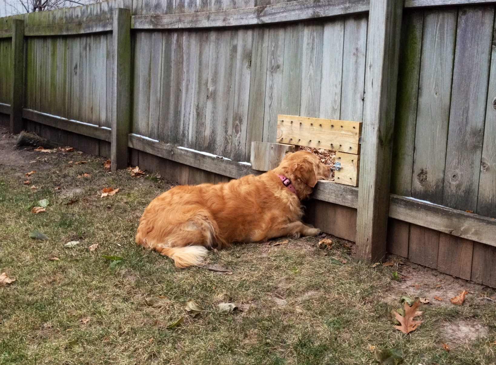 dog-fence-friendships-4