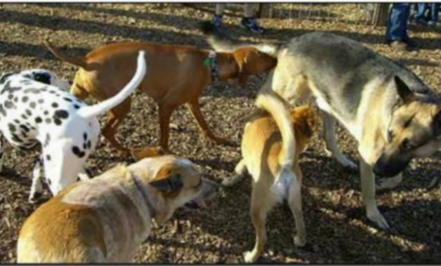 dog sniff line