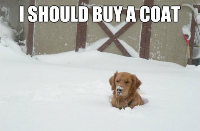 i should buy a coat