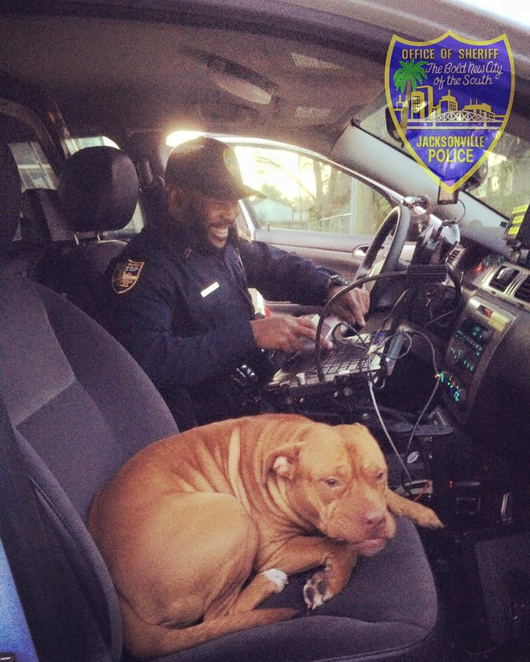 pit pull in cop car