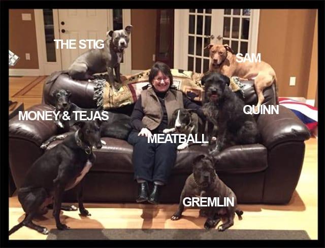 Gremlin's Rescue Dog Family