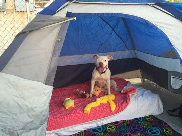 Lizzy Tent