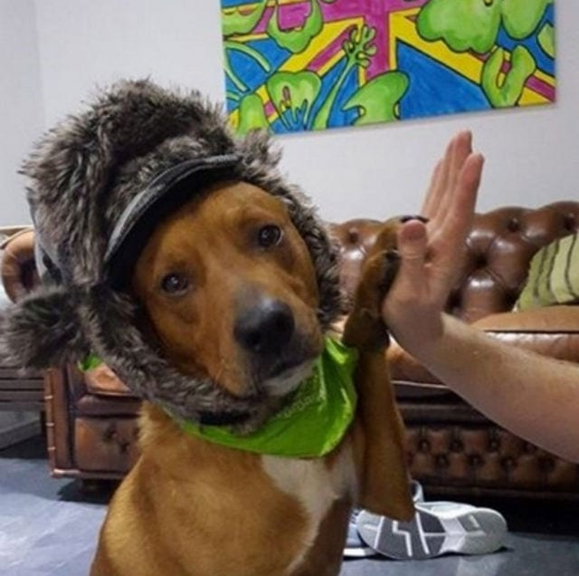 Why Are Dogs Afraid Of Hats  e92dc567f8bc