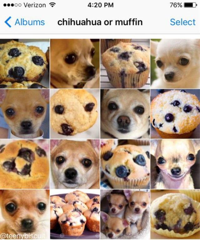 chi muffin