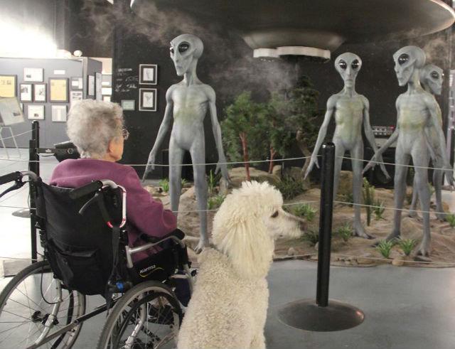 dog-friendly museum
