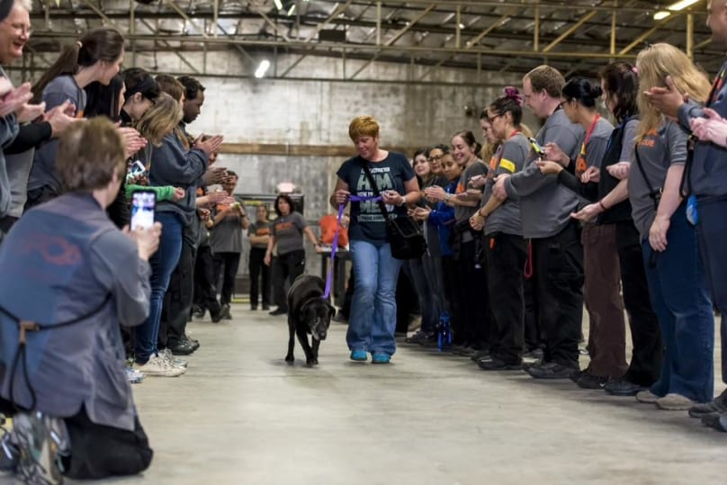 Old Dog Who Was Last Of Nearly 600 Animals To Be Adopted Gets Hero's Sendoff