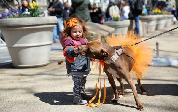 Adoptapalooza Dog kid tutu