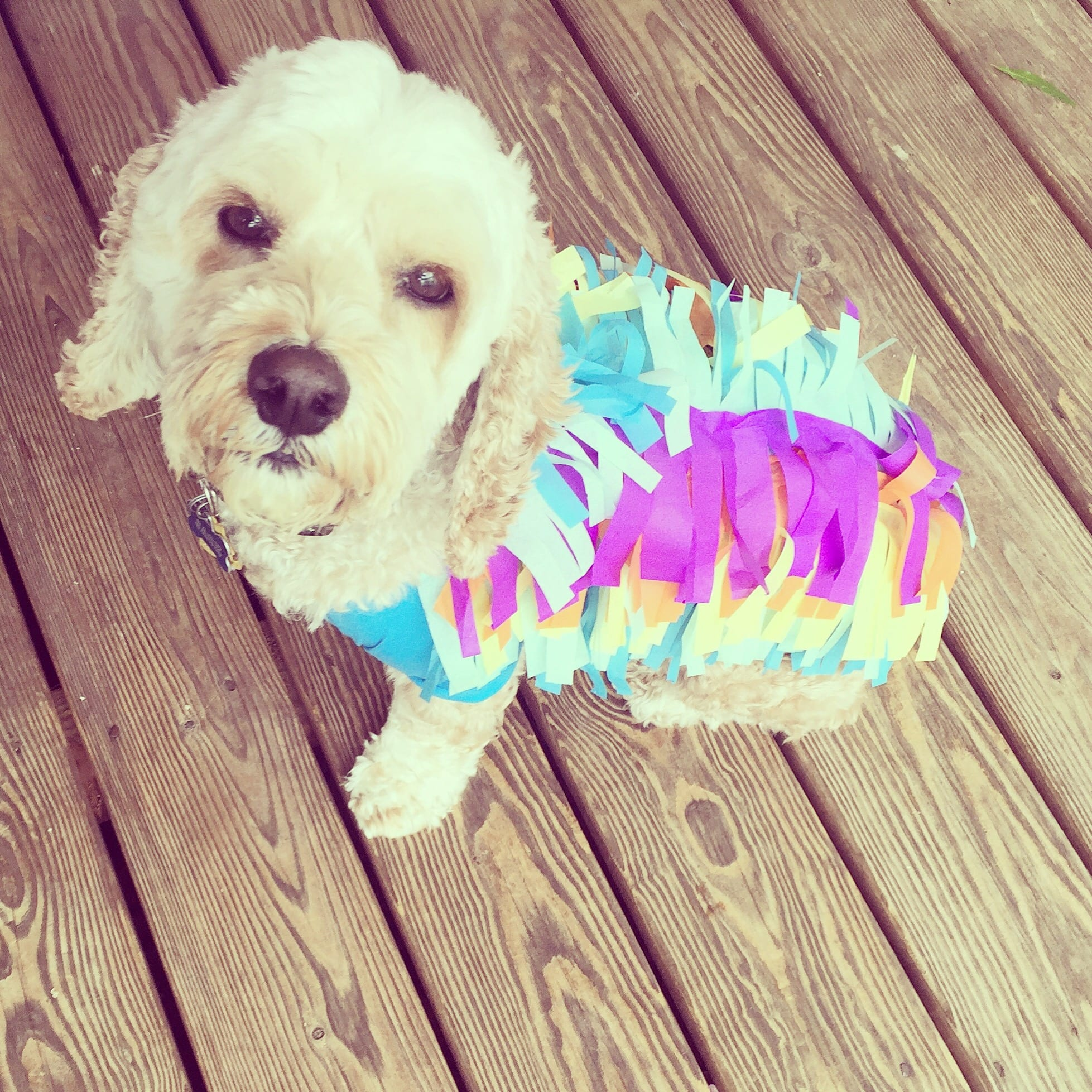This super easy piata costume is guaranteed to turn your dog into a diy dog piata costume 1 solutioingenieria Images