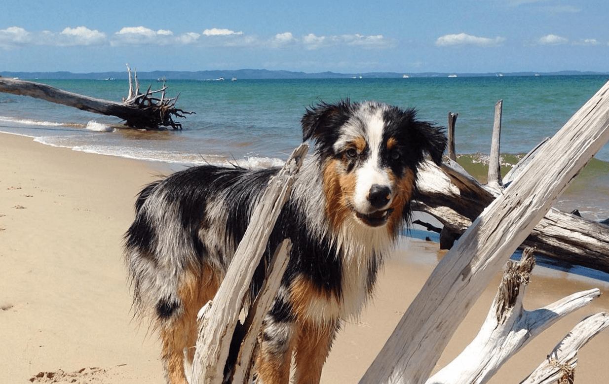19 beach hazards to avoid for your dogs day of sun and sand barkpost solutioingenieria Images