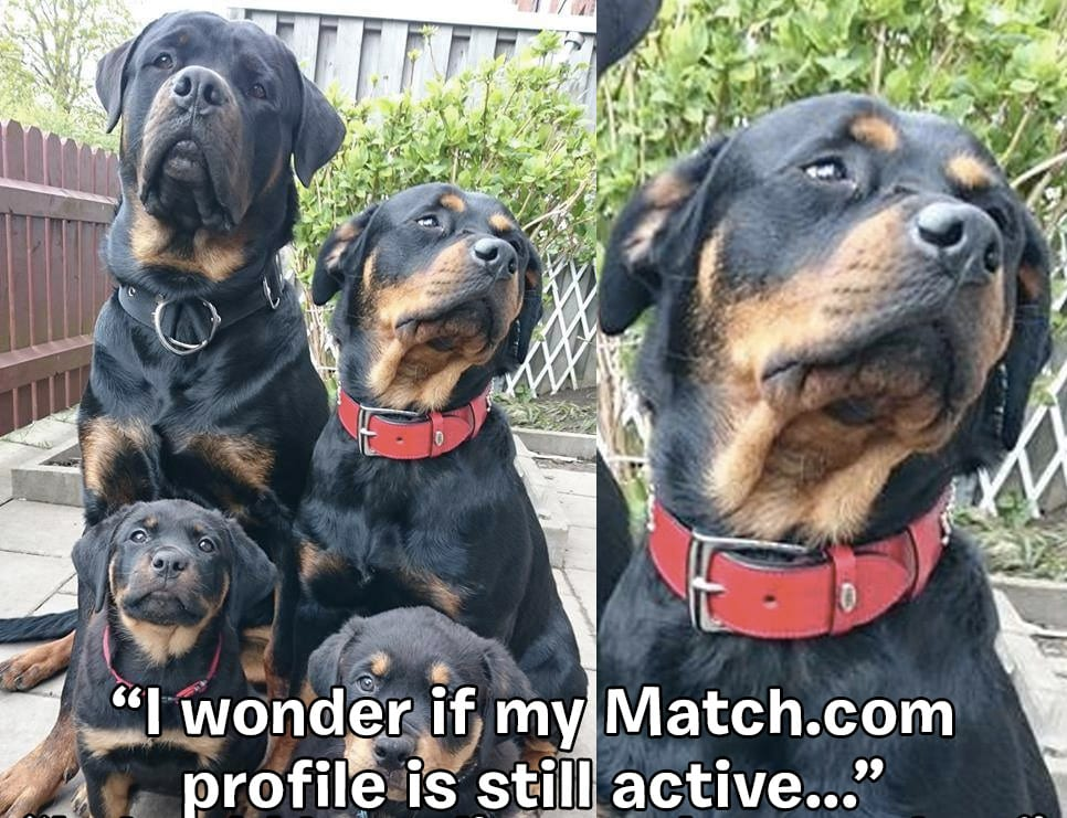 captionthis-rottie-honorable-mention-1