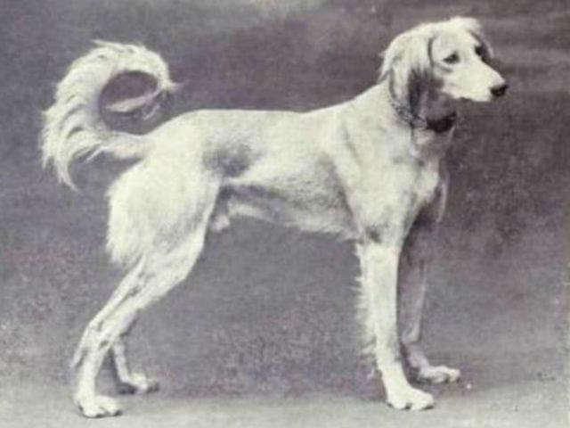 dog-emgn-19