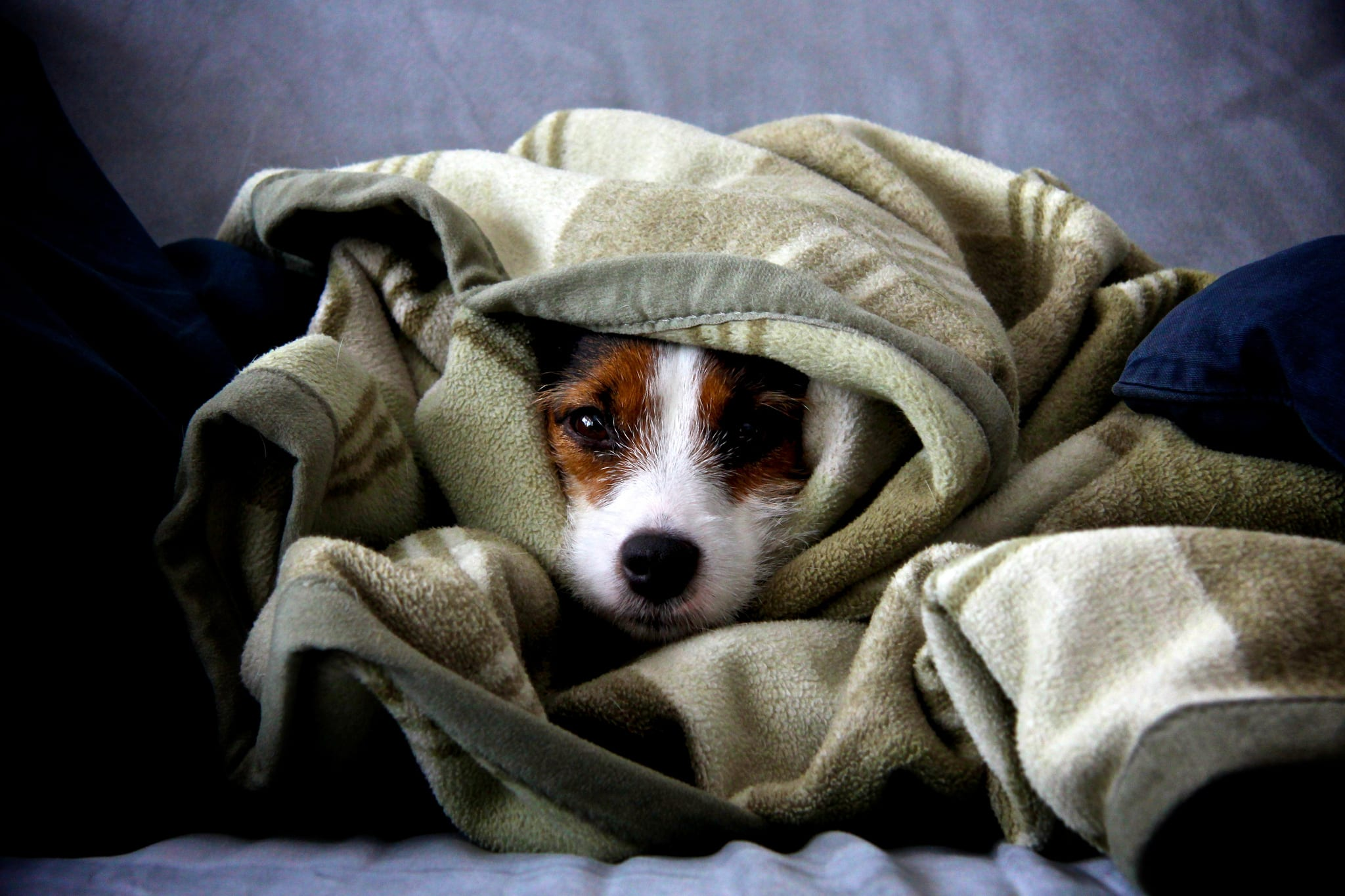 undercover dog