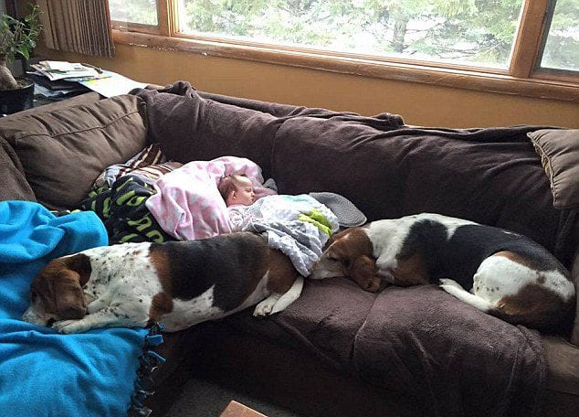 nora hounds
