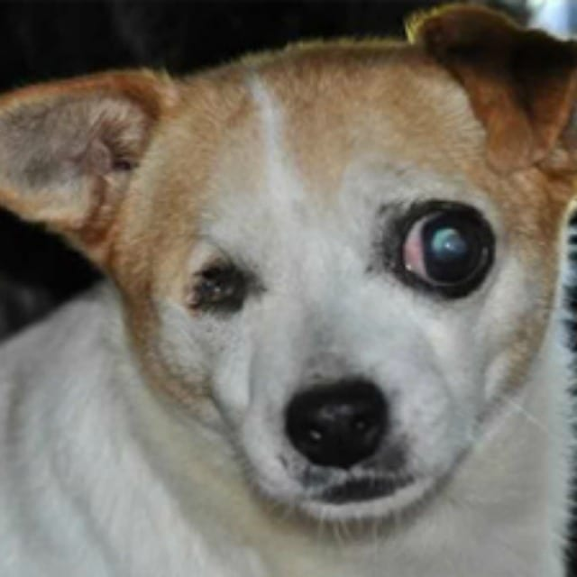 Humane Humane Society Releases List Of Worst Puppy Mills In The U S