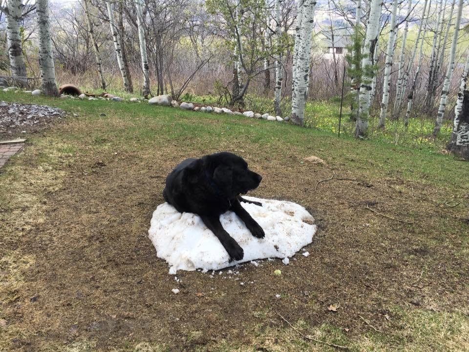 snow-dog-8