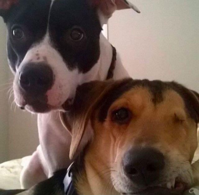 xena and friend