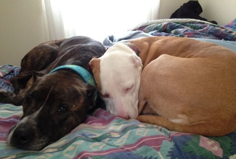 Two Dogs Living In Empty House Since Their Owner Died Desperately Need New Home