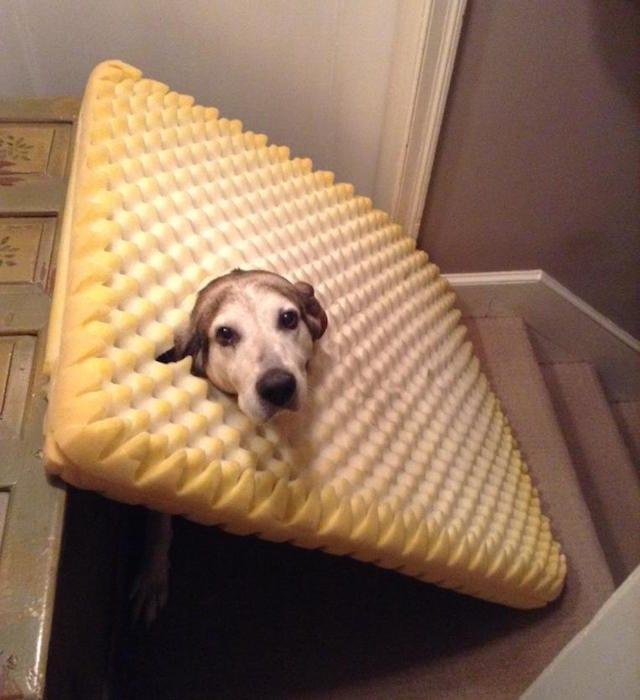 dog found_3