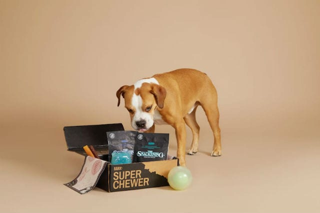 Dog with Super Chewer Box