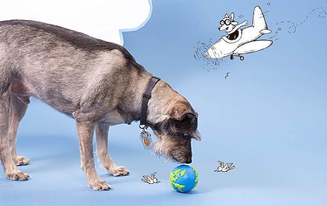 Terrier Dog with BarkBox Orbee Globe Fetch Ball