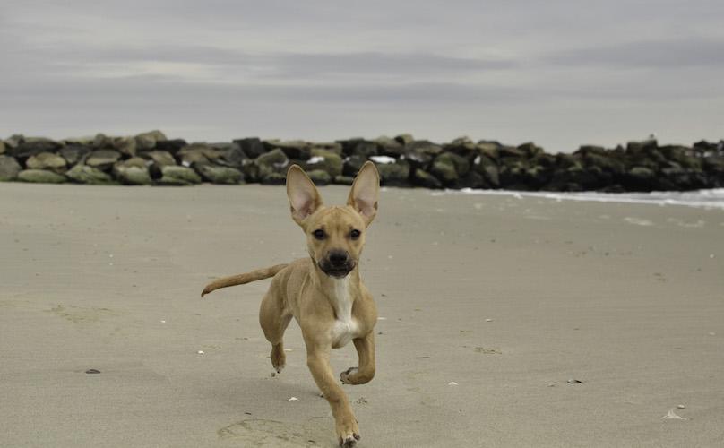 Hond die op het strand loopt