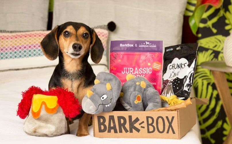 Dachshund with chewrassic bark barkbox