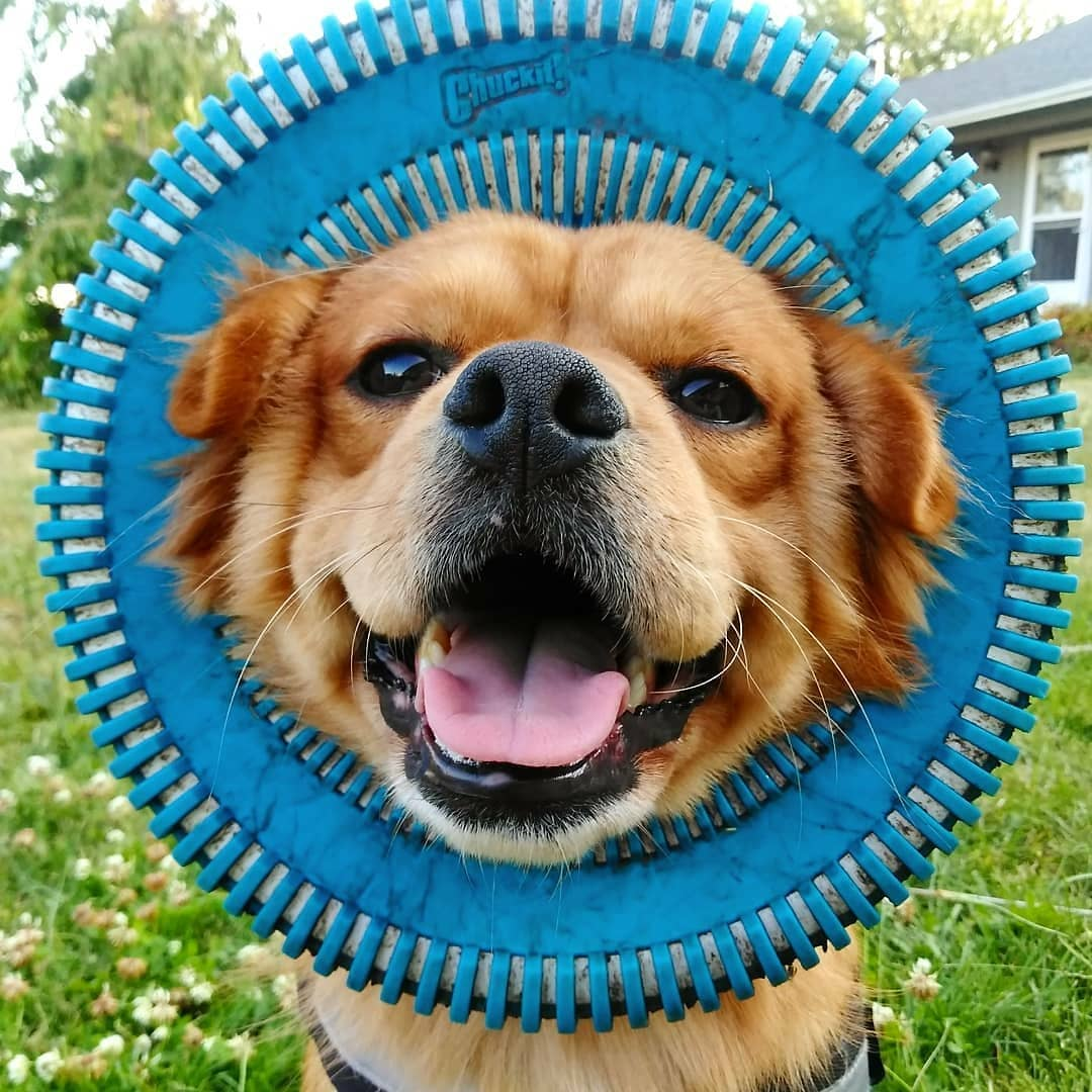 13 Coolest Outdoor Dog Toys Of All Time - BarkPost
